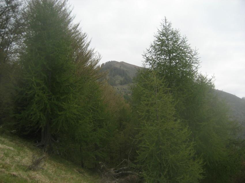 Alom (Monte) da Coimo, anello per Alpe Cortina e Alpe Pescia 2012-05-19