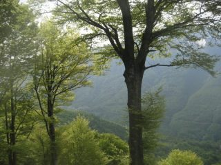 verde su verde: scorcio del panorama durante la salita