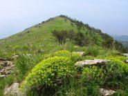 uno sgurdo indietro sul panoramico crinale verso rocca del'erxu, sullo sfondo il mare