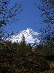 La punta della Grivola vista dal bosco, salendo al bivacco Gontier.