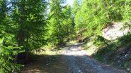 salendo nel bosco iniziale sopra Rhuilles (2-6-2012)