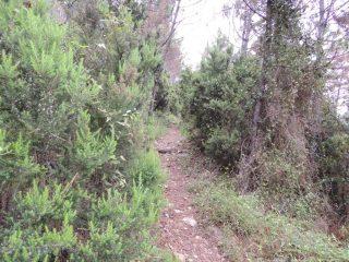 Il sentiero poco dopo la partenza