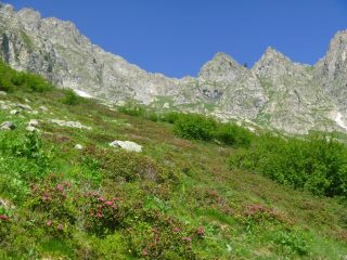 vallone ricco d'arbusti