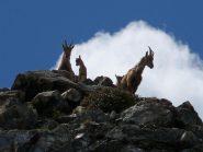 2012-06-17_1151.4stambecchi