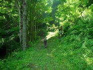 Prima parte del bosco