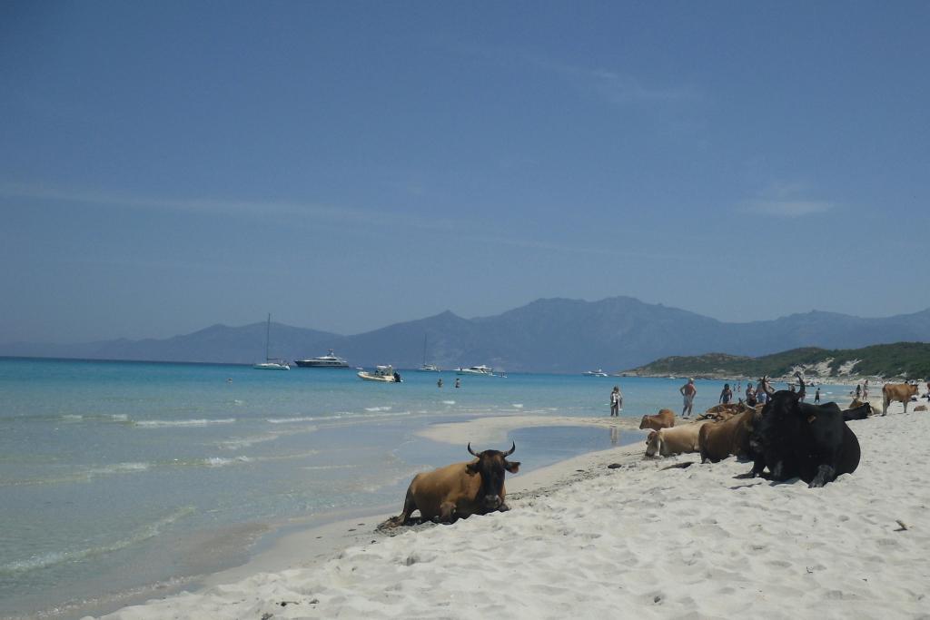 Saleccia (Spiaggia) da Casta, giro per Desertes des Agriates 2012-06-19