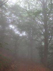 Sale la nebbia e diventa spettrale