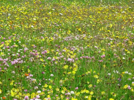 fioritura ai prati del putia