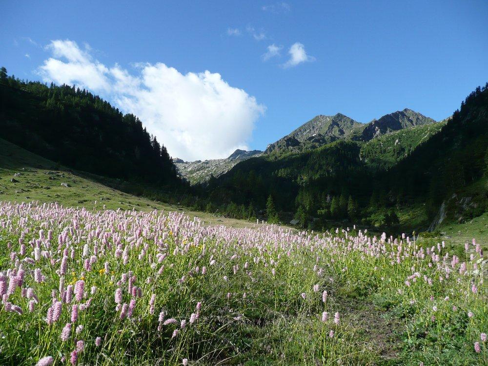 Fricolla (Colle) da Outre l'Eve, anello valloni della Legna e Manda 2012-07-07