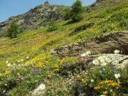Tappeto di fiori di montagna