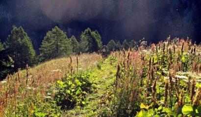 In salita oltre l'Alpenzù