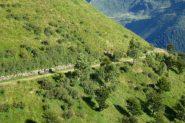 Discesa nella stupenda Valle d'Albano