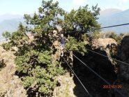 il piccolo ponte tibetano (proprio piccolo...)