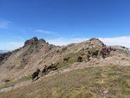 08 - popolazione dell'anticima del Mont Fallere