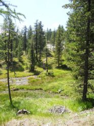 bel bosco in salita