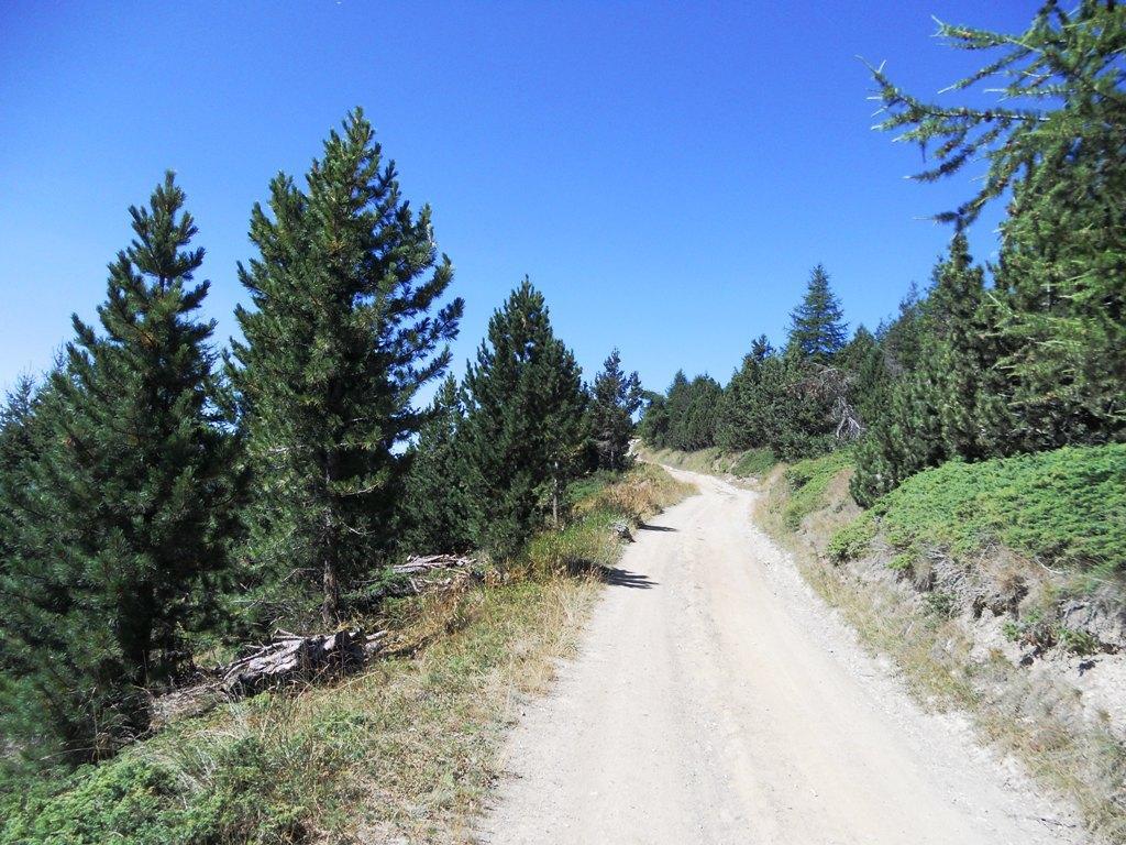 in salita nel bosco