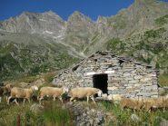 Alpe Trucco ed il Colle Perduto