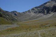 Parte alta del vallone e mille pecore