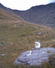 Il segno che indica a sx verso la cresta erbosa, a circa 2750 m