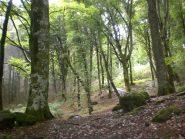 alberi di oltre 40 mt...