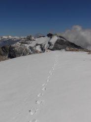 03 - la cresta dal Sommeiller alla P.ta Ambin, sulllo sfondo Niblé e Ferrand