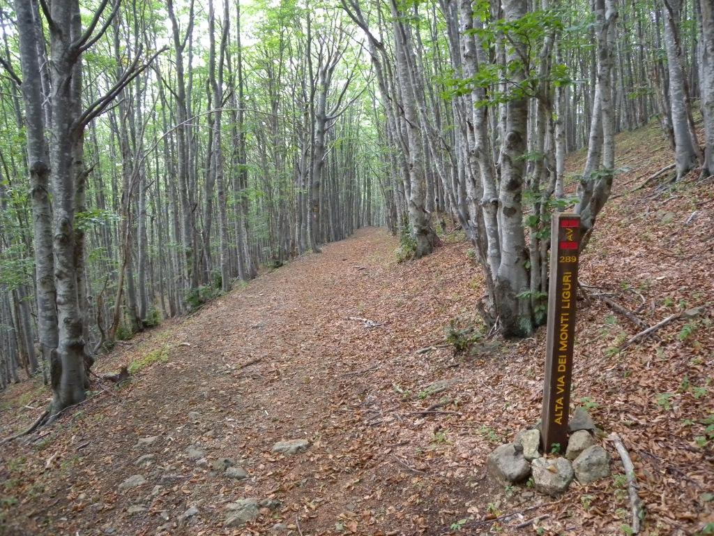 Bocco (Passo del) - Passo della Forcella anello da Prati, Alta Via Monti Liguri 2012-09-09