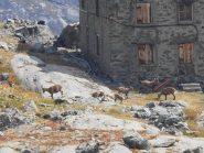 06 - stambecchi al Lago della Rossa