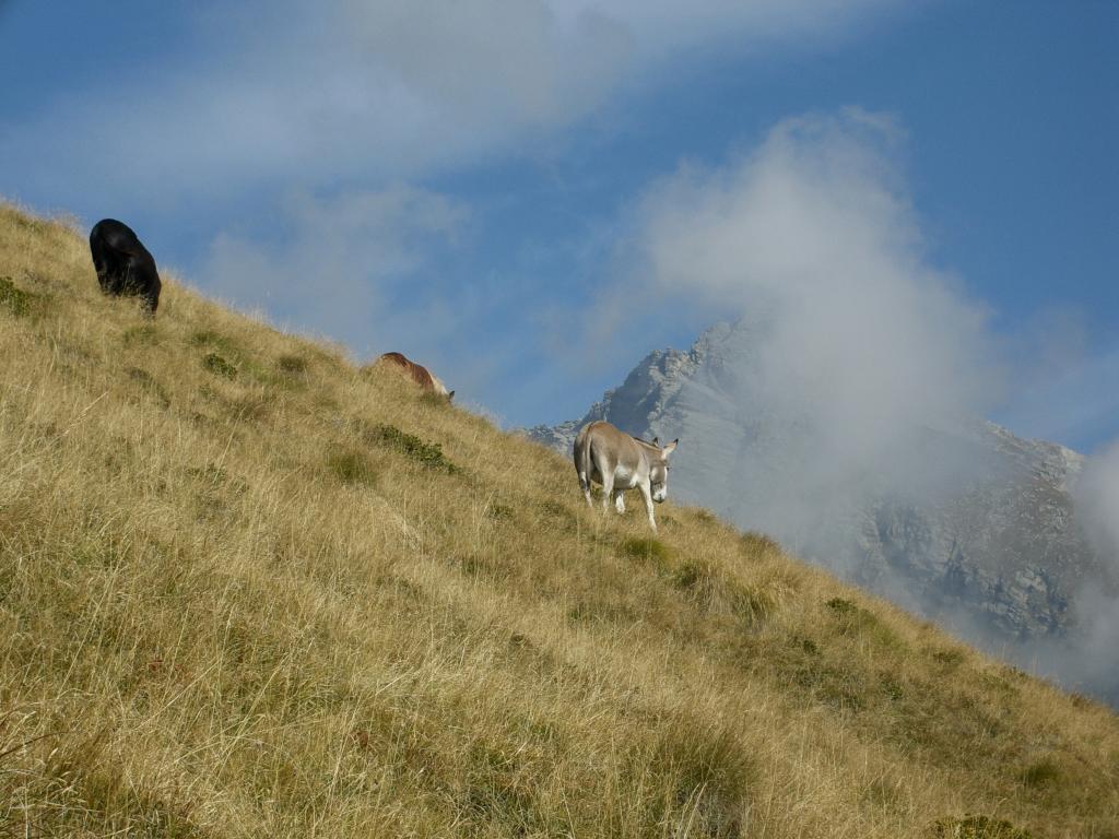 Simpatici incontri sotto la dorsale del Monte Arzola