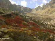 iil rosso delle foglie di mirtillo con il colle sullo sfondo