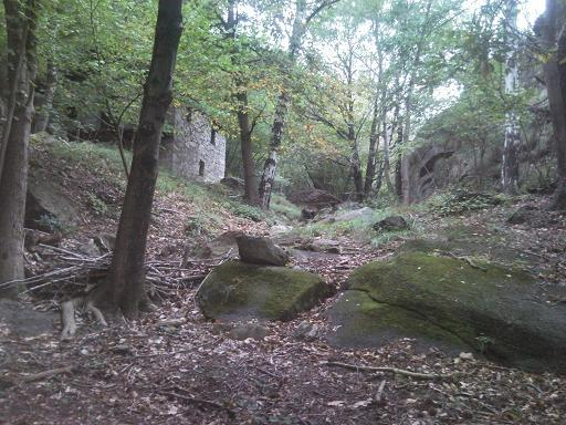 nel bosco più fitto e tetro...