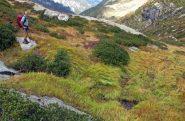 Sentiero inghiottito dall'erba