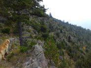 Mulattiera forestale