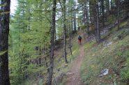 salendo nel bosco iniziale del Vallon des Houerts...01 (7-10-2012)