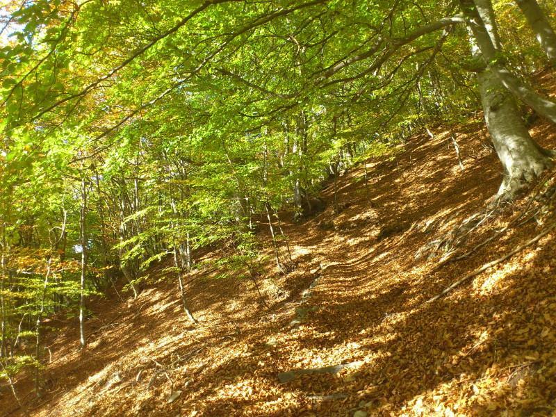 sentiero e salita nel bosco autunnale