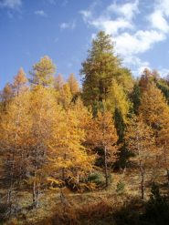 bosco di salbertrand