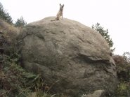 Il masso di granito. Maggiori informazioni su https://www.serviziweb.unito.it/blog/?id=50894