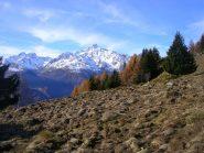 Alpe Castellaccio devastato dai cinghiali