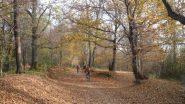 nei boschi della Baraggia di Candelo