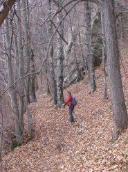 Nel bosco verso Ronco di Pont