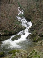 Oggi il Rio Cenaie o Madone, é bello gonfio!