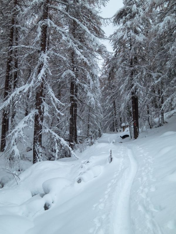 All'inizio del bosco