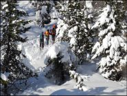 tra gli alberi carichi di neve