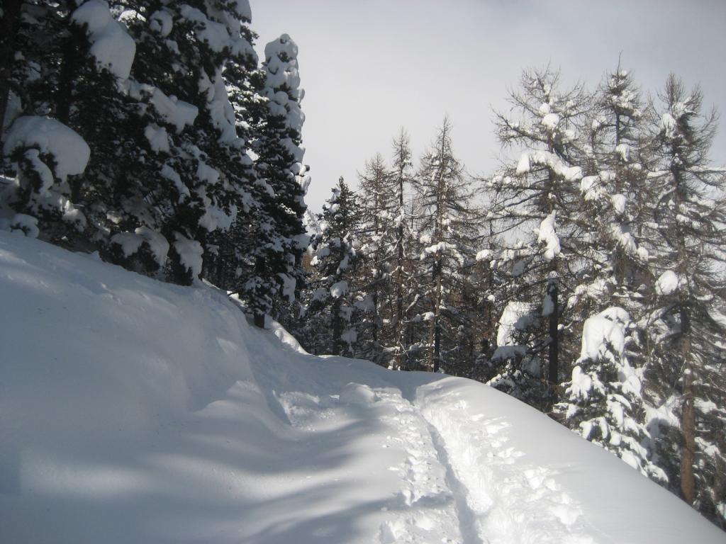 Troppa neve