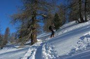 bella traccia e gran neve sin fori al bosco