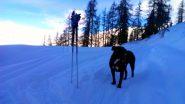 Karis, all'alpe Creux, in un momento di riposo in fase di discesa