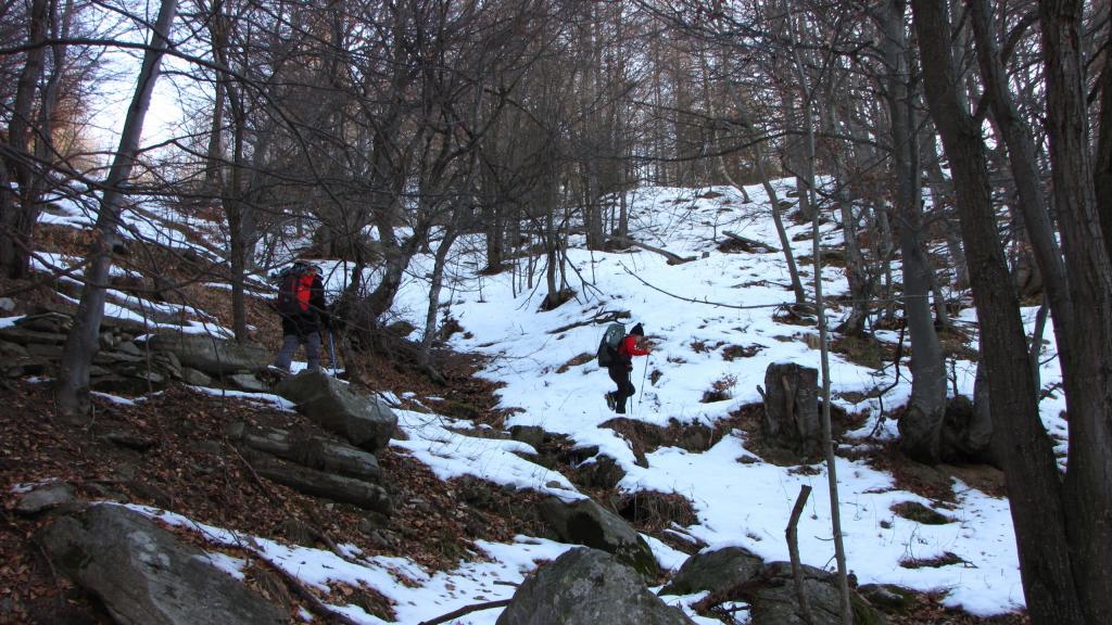 salendo nel bosco, per tagliare un tratto della stradina per il Colle Birrone (22-12-2012)