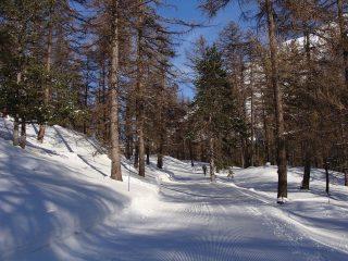 un tratto di strada battuta nel bosco