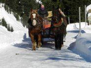 carrozza-slitta trainata dai cavalli