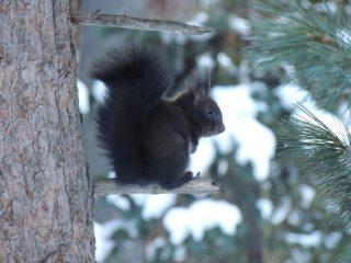 scoiattolo nel bosco