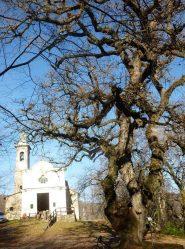 la madoninna della foresta col suo albero monumentale